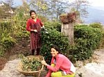 Bamboo Retreat Gardening Sikkim, India