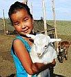 Nomad Girl Goat Gobi Mongolia