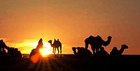 kamel safari rajasthan indien