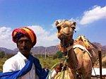 Herdsman Camel Rural Rajasthan Rajgarh