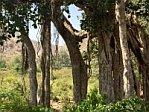 Banyan Tree Rajasthan, India