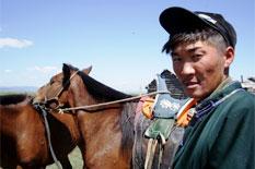 nomade mongole pferde mongolei