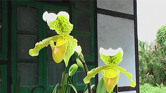 orchideen dorf sikkim ost indien
