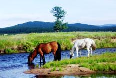 pferde mongolei khentii nationalpark mongolei