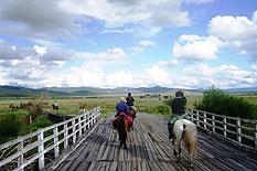 pferde trekking khentii nationalpark mongolei