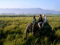 safari elefant kaziranga nationalpark assam indien