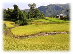 samthar plateau land leute kalimpong indien