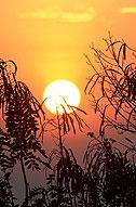 sonnenuntergang stimmung assam kaziranga indien
