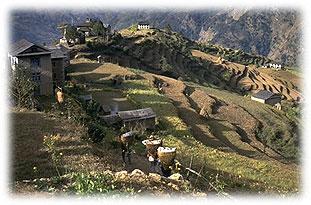 terrassierte felder himalaya nepal