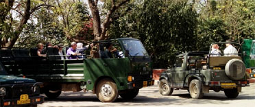transportation safari rathambore national park tiger rajasthan indien