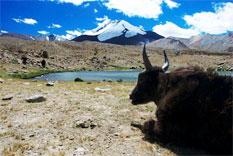 trekking landschaft camp markah ladakh indien