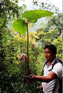 tsheten norbu bhutia expert guide yetilaya travels yoksum sikkim india