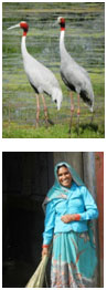 vogel reservat bharatpur rajasthan indien