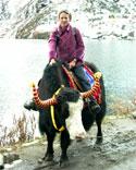 yak reiten tsomgo see sikkim indien