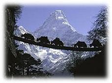 yak trekking nepal